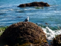 Bird on Rocks